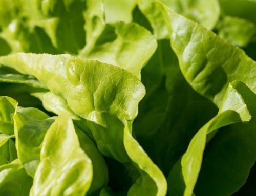 Grüne Diät